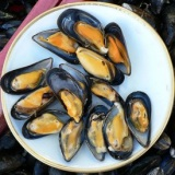 Eating mussels can make your semen radioactive!