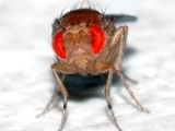Sexual harassment: Cuts down on babies and mutations in flies