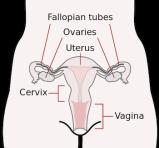 The discriminating vagina
